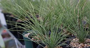 観葉植物生産