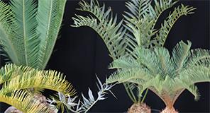 各種観葉植物小売販売